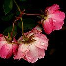 Heavy with Rain by Jonicool