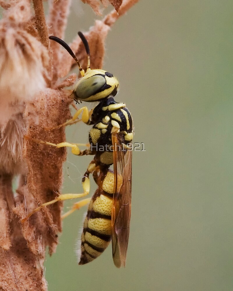 Tiny Yellow Wasp Macro by Hatch1921