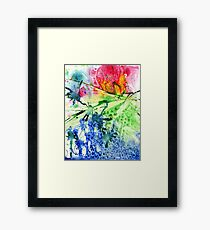 Grapefruit Sunrise Framed Print