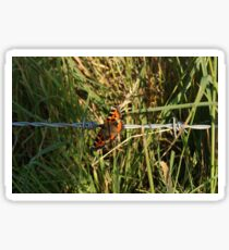 Butterfly on Barbed Wire Sticker