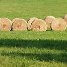 Roundbales ready for pick-up in the field by Bine