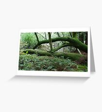 Moss Covered Greeting Card