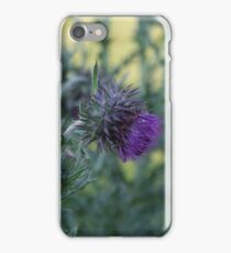 Thistle in a Meadow iPhone Case/Skin