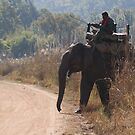 Mahout and Elephant by Steve Bulford