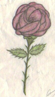 The Rose by Christi