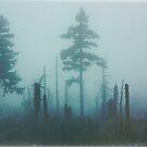 Dark forest by Dominika Aniola