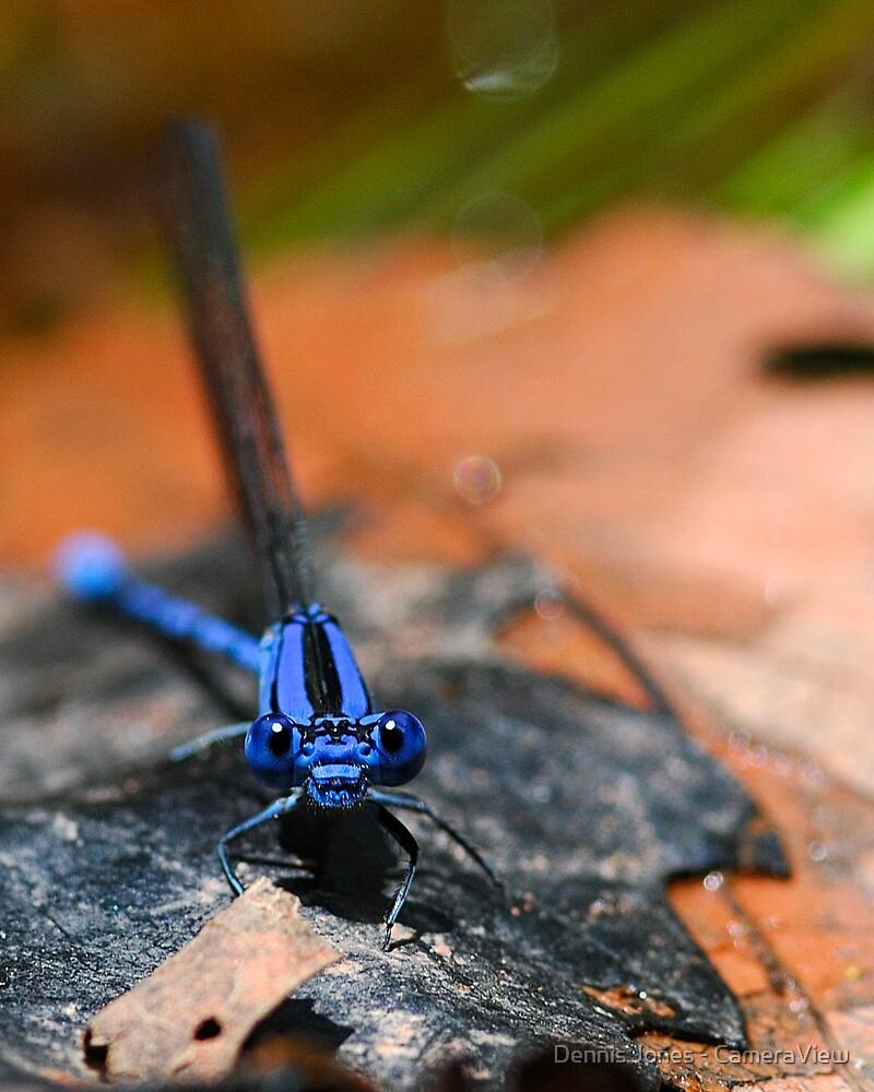 These Baby Blues by Dennis Jones - CameraView