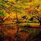 Autumn Colours by KeepsakesPhotography Michael Rowley