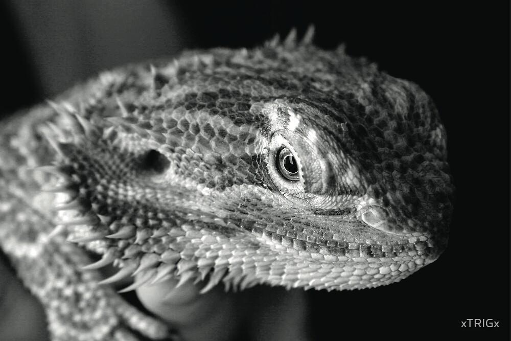 Bearded Dragon by xTRIGx