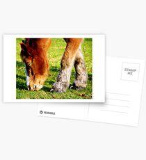 Horse Shoes  Postcards