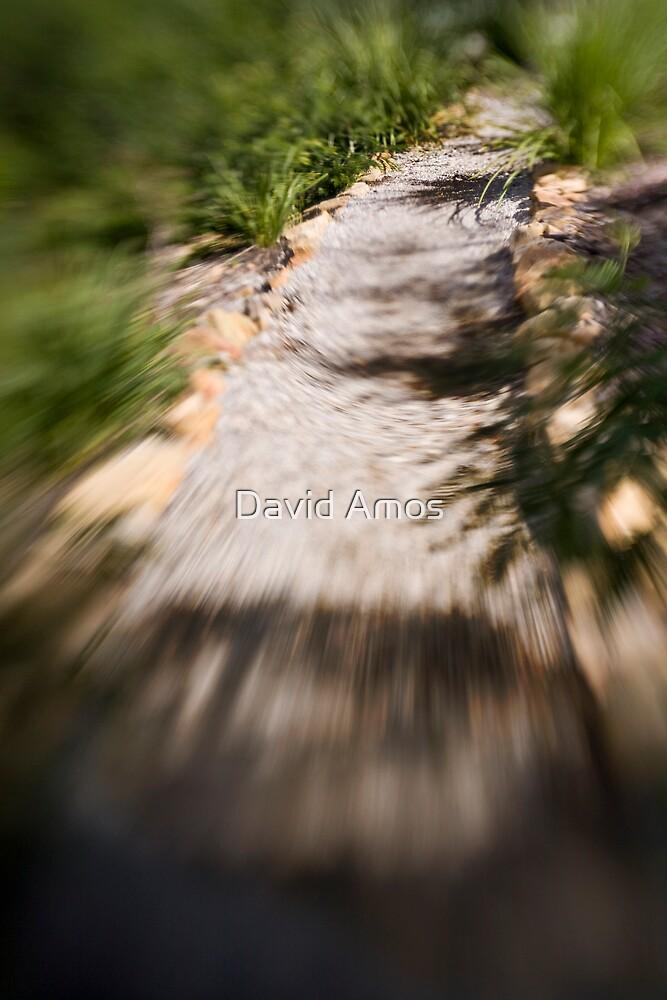 Berima X - Lensbaby by David Amos