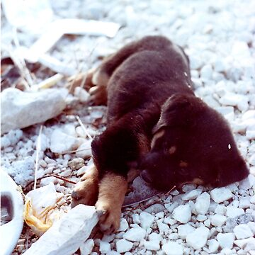 Puppy in Greece. by Kirill