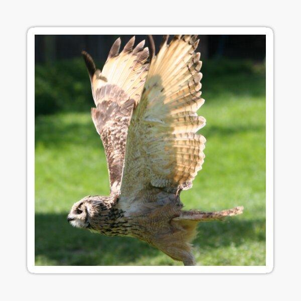 Flying Bengal Eagle Owl Sticker