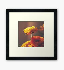 Cinnamon Peach Framed Print