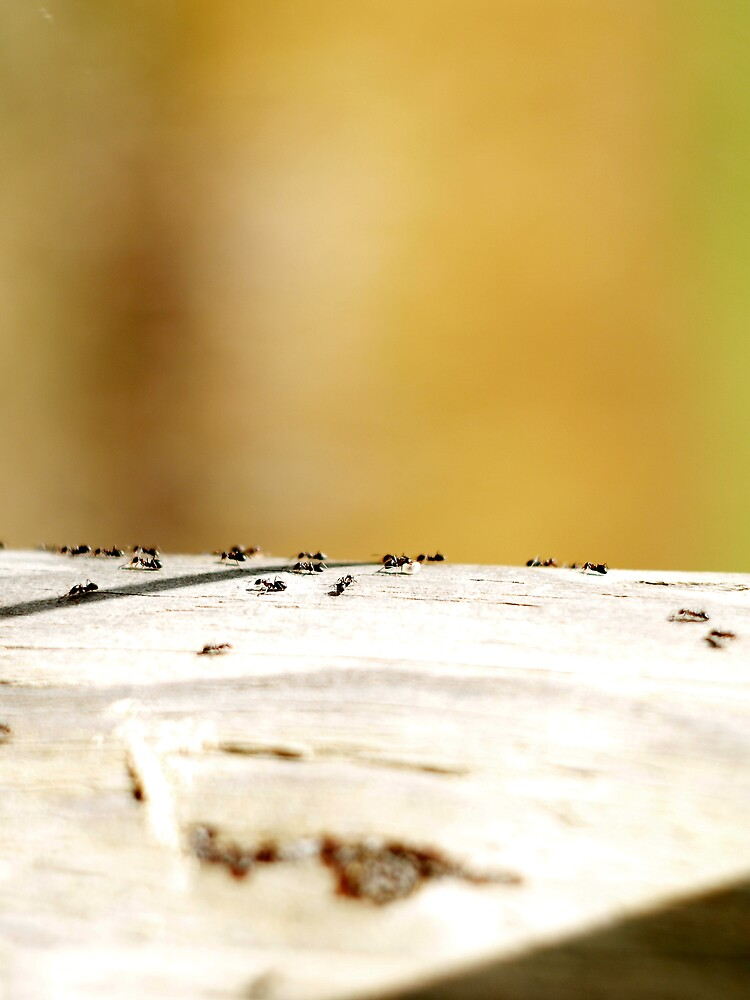 Ants by Kirill