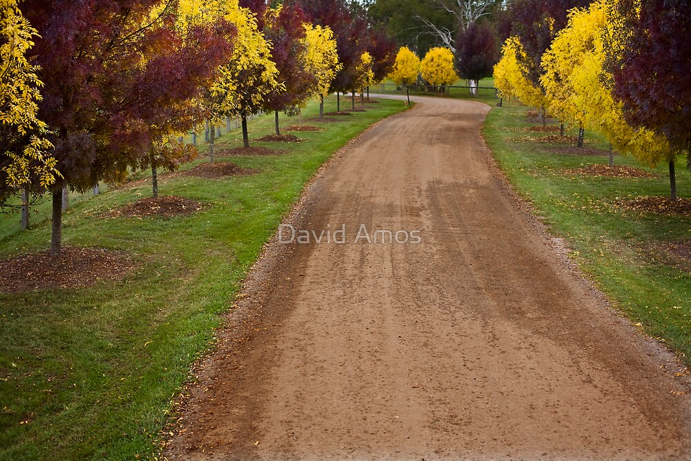 The Road In. - Centenial Winery by David Amos
