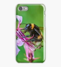 Bumble bee gets stuck in to an orchid iPhone Case/Skin