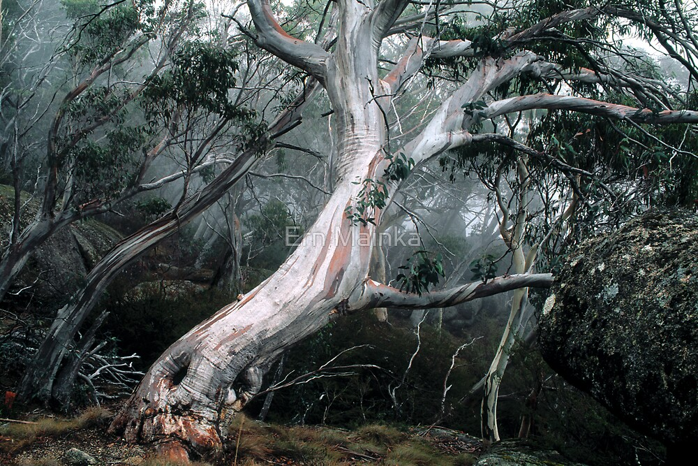 Quot Snow Gum Forest Quot By Ern Mainka Redbubble