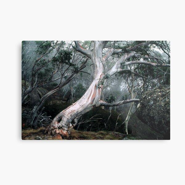 Snow Gum Forest Metal Print