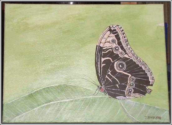 Butterfly on leaf by jbbb