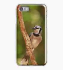 Blue Jay's rest iPhone Case/Skin