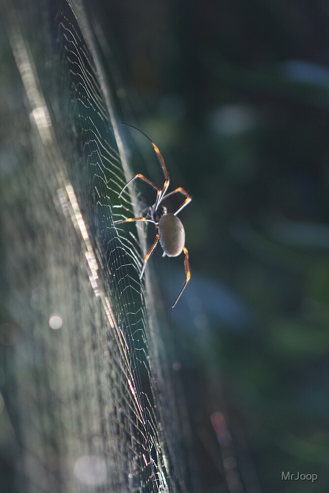 It's a jungle, out there (around my house)! The spiders love it.  by MrJoop