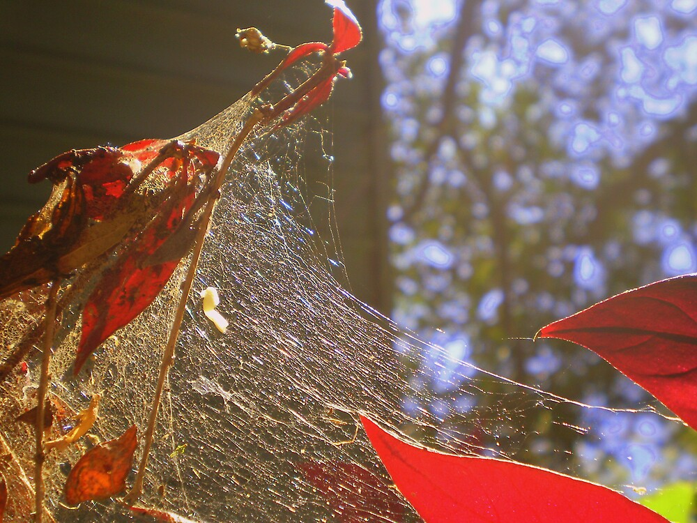 red in web..... by Jessica Lauren Smith