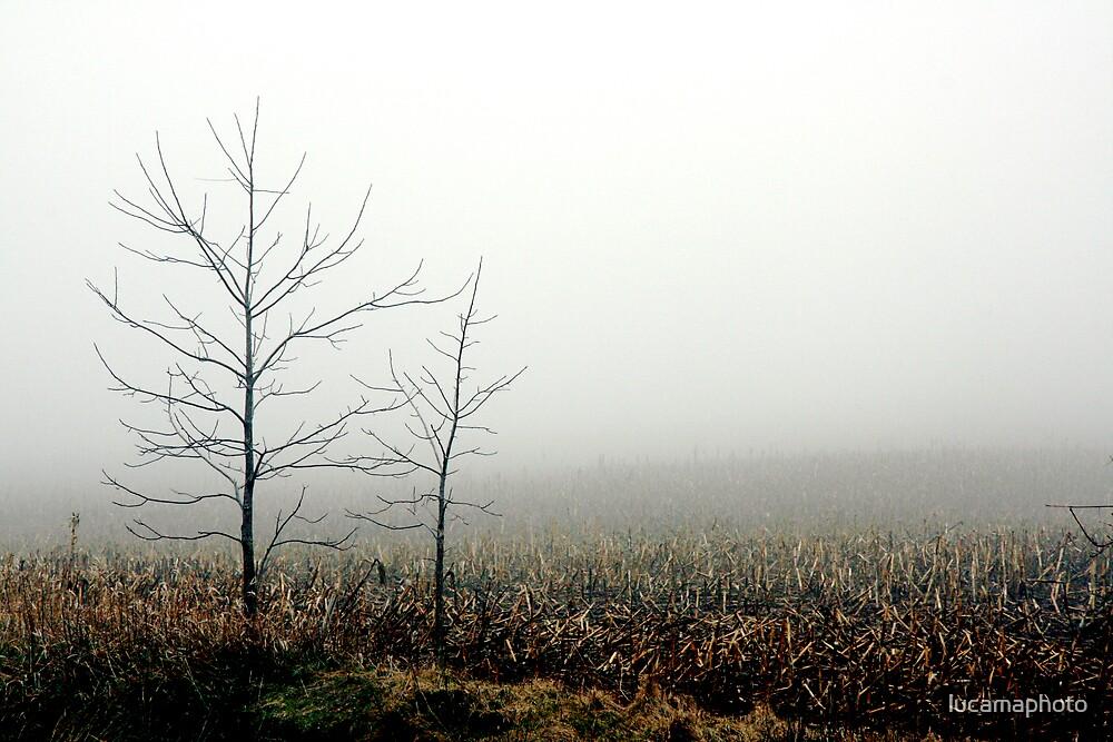 foggy ol' cornfield by lucamaphoto