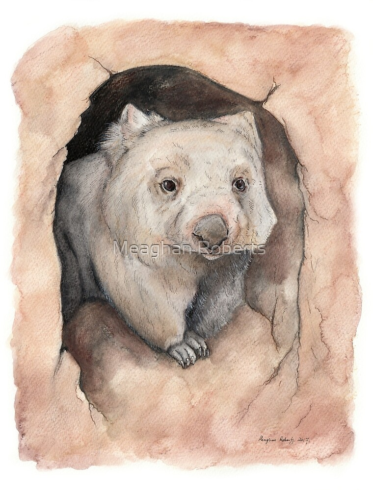 Wombat in Burrow by Meaghan Roberts