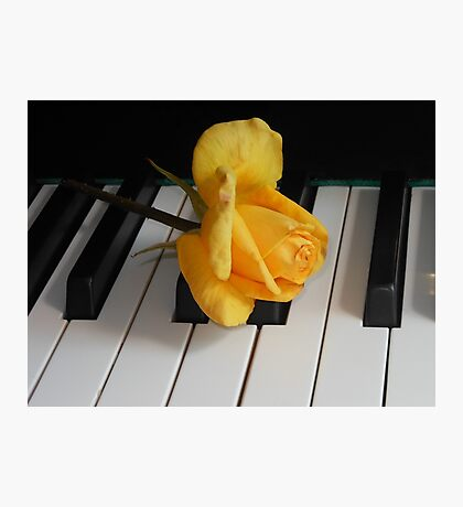 Golden Rose on Piano Keyboard Photographic Print