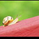 Crawling Along by Darrell Sharpe