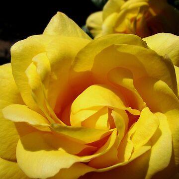 Journey into Yellow - Rose Supermacro by SunriseRose