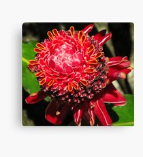 Torch Lilly Canvas Print