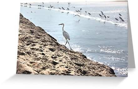 Crane On The Shore by Gravityx9