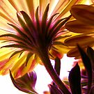 Solar Flair by Andi Hardwick