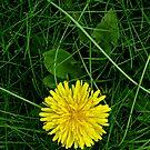Hello Yellow! by Rebecca Cruz
