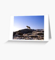 Wolf On A Rock Greeting Card