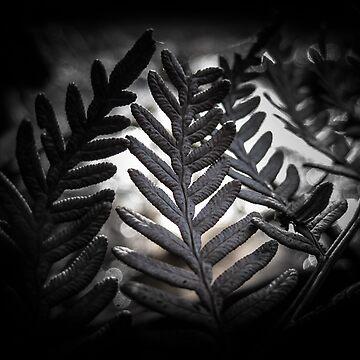 Dark Fern by Terrain75
