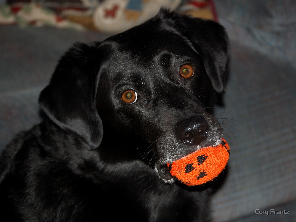 Just play with me already by Cory Frantz