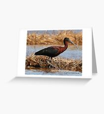 Glossy Ibis crosshatched Greeting Card