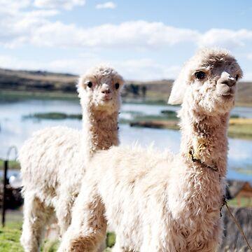Llama Babies by digitalmirror