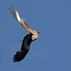 High as a kite by Sue Purveur