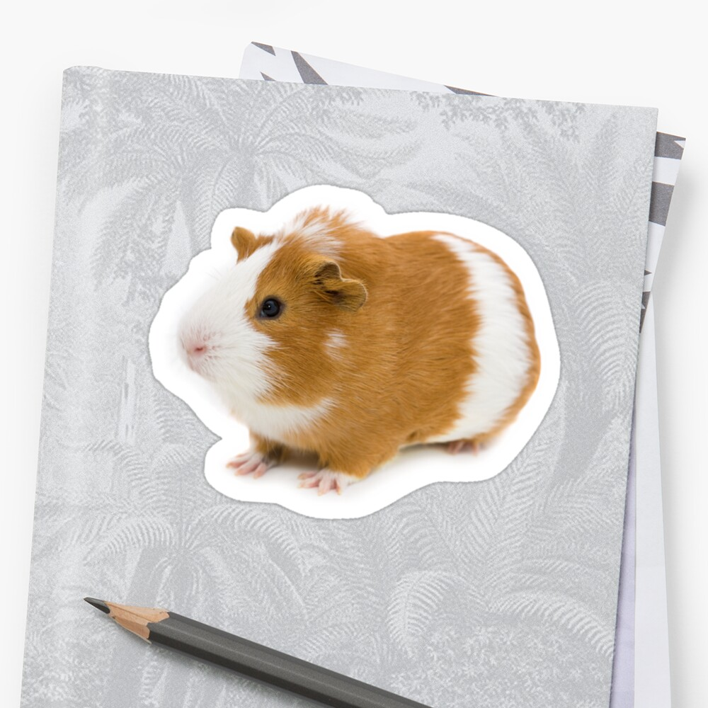 Red and white guinea pig by Vasily