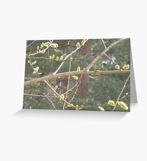 Catkins in April Greeting Card