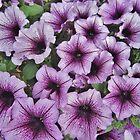 Purple Fanfare by RVogler