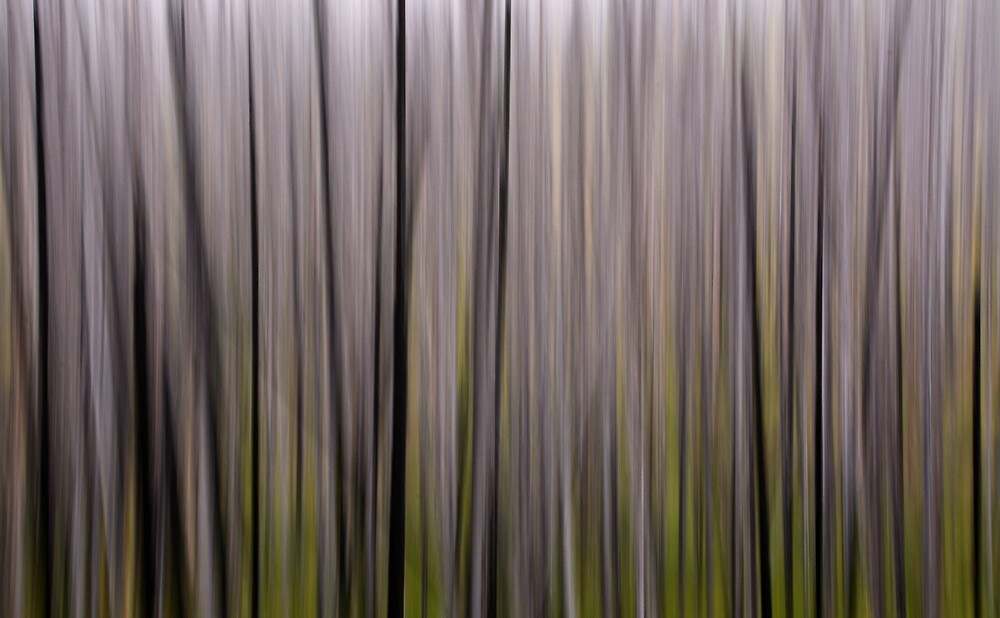 Forest Illusions- Lodgepole by Whisperingpeaks