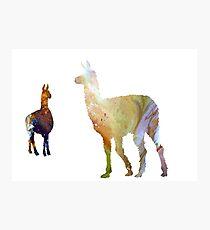 Llama art Photographic Print