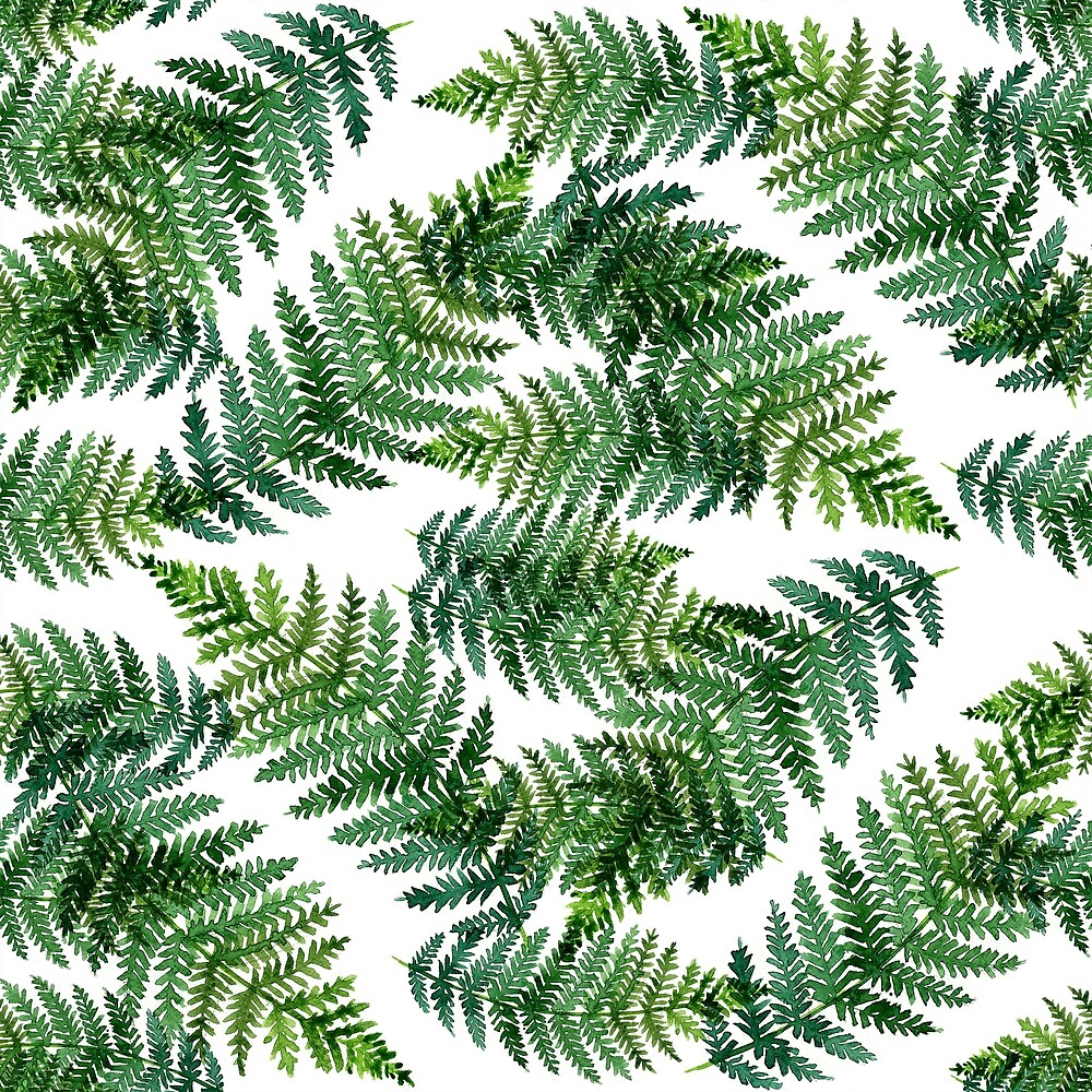Watercolor summer insulated fern on white background by NataliMya