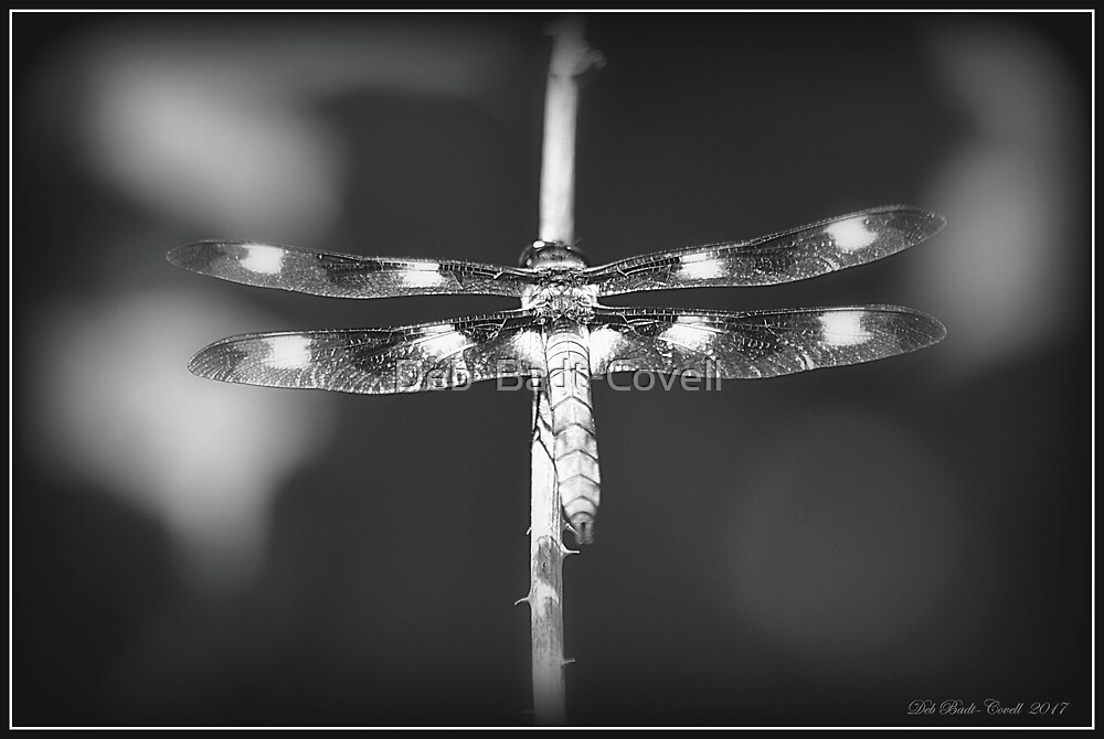 12-Spotted Skimmer Dragonfly (Male) - in Black and White by Deb  Badt-Covell