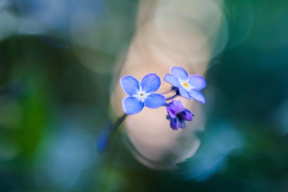 Blue by ewmart